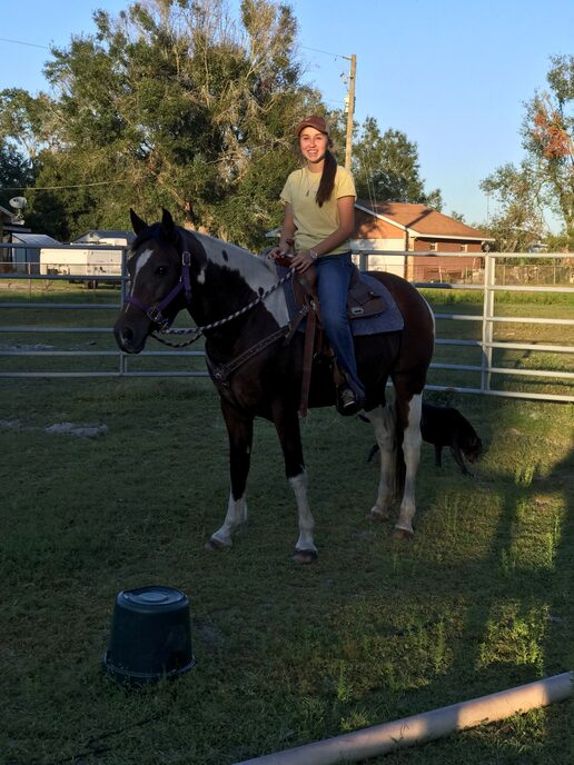 Lyric has been started under saddle.  She has amazing potential with some work.  She knows the basics and is ready to proceed with her own human.  She is green and will need a experienced handler to continue her training.